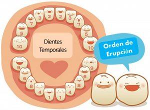 Dentista infantil de niños. Dientes de leche, Odontopediatria, Tratamientos dentales